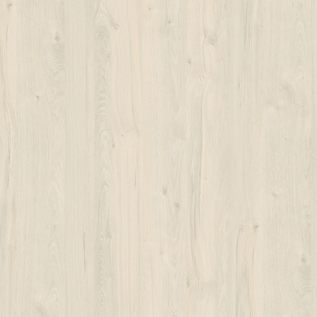 White Coastland Oak